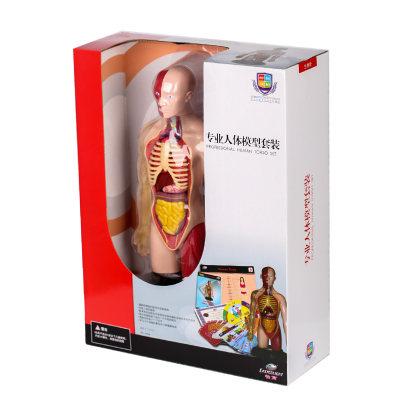 香港 eastcolight/怡高 专业人体模型套装儿童医学实验体解剖骨骼骨架